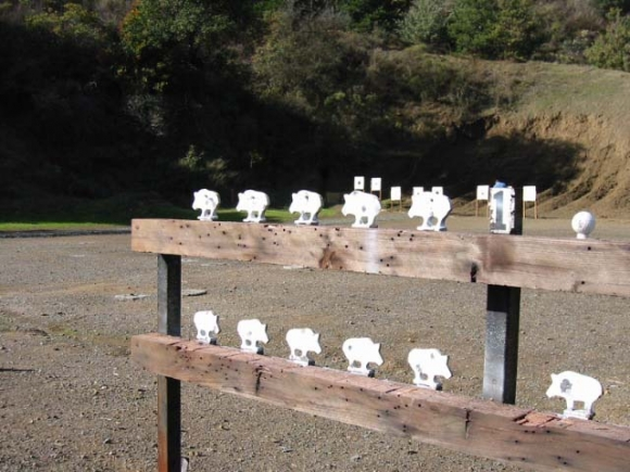 Pigs; golf balls are used for a special post-match contest